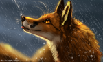 Size: 1250x752 | Tagged: safe, artist:flashlioness, canine, fox, mammal, red fox, feral, lifelike feral, 2020, amber eyes, ambiguous gender, black nose, blep, brown body, brown fur, digital art, digital painting, fur, non-sapient, orange body, orange fur, rain, realistic, side view, signature, solo, tongue, tongue out, wet, whiskers, white body, white fur